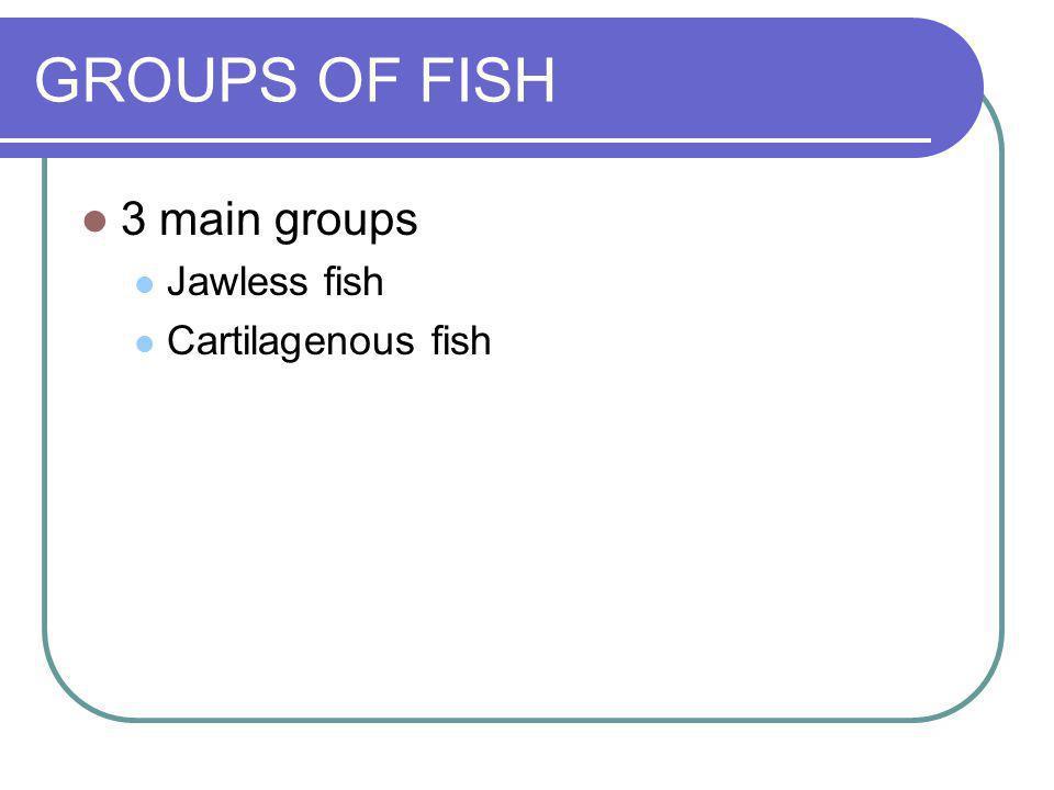 GROUPS OF FISH 3 main groups Jawless fish Cartilagenous fish