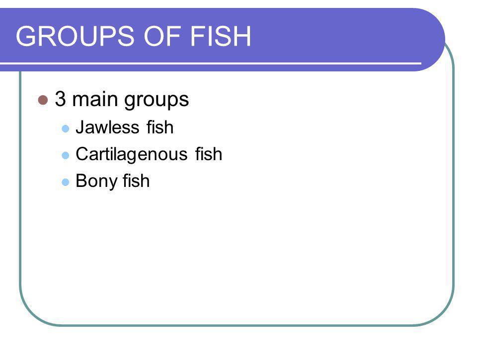 GROUPS OF FISH 3 main groups Jawless fish Cartilagenous fish Bony fish