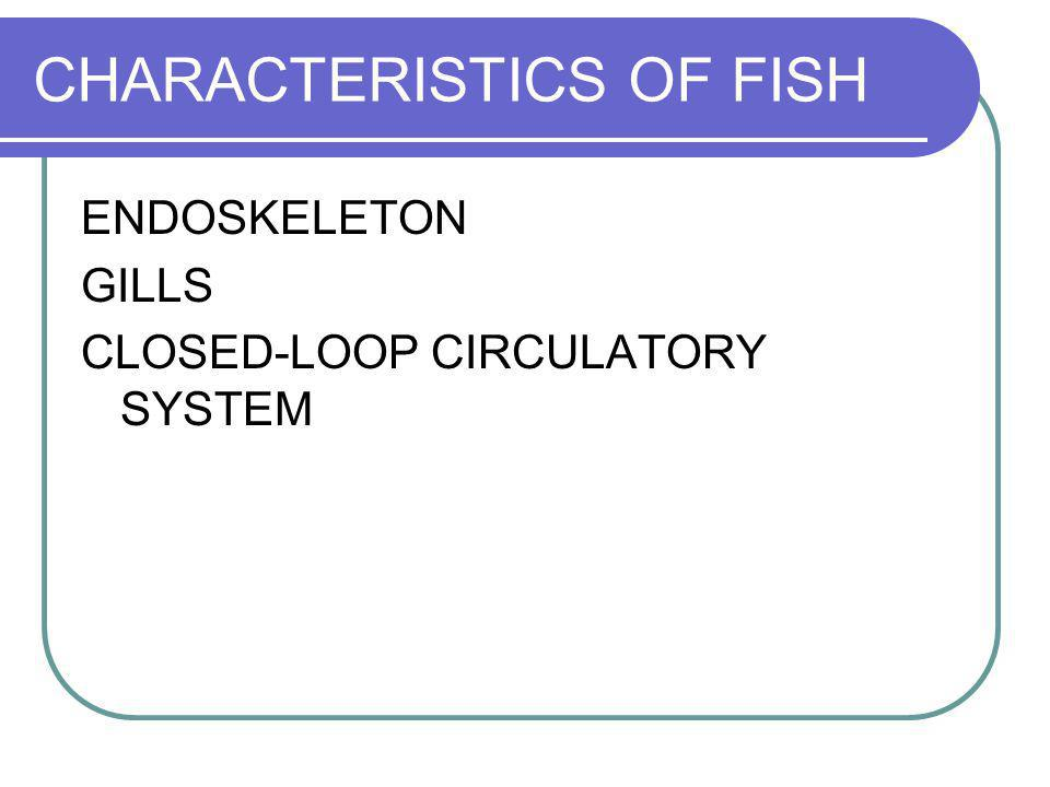 CHARACTERISTICS OF FISH ENDOSKELETON GILLS CLOSED-LOOP CIRCULATORY SYSTEM KIDNEYS