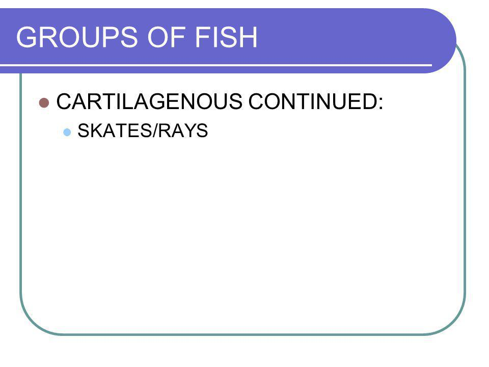 GROUPS OF FISH CARTILAGENOUS CONTINUED: SKATES/RAYS