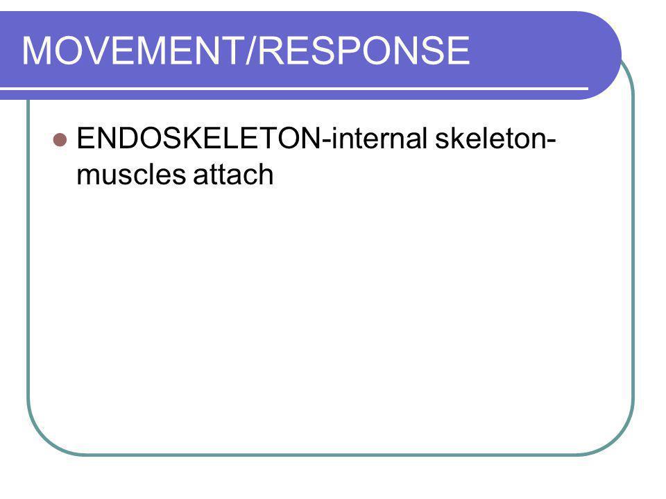 MOVEMENT/RESPONSE ENDOSKELETON-internal skeleton- muscles attach FINS AND SWIM BLADDER