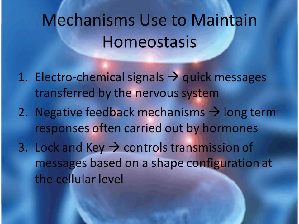 Mechanisms Use to Maintain Homeostasis 1.Electro-chemical signals  quick messages transferred by the nervous system 2.Negative feedback mechanisms  long term responses often carried out by hormones 3.Lock and Key  controls transmission of messages based on a shape configuration at the cellular level