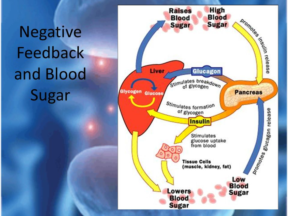 Negative Feedback and Blood Sugar