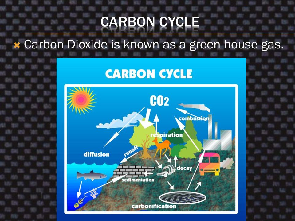  All living things on earth (Plants and Animals) are made of carbon.  Animals breathe in oxygen and release CO 2  Carbon Dioxide can be found in th