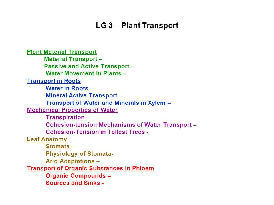 Unit II Plants Learning Goal 3 Examine how materials are transported throughout the body of a plant.