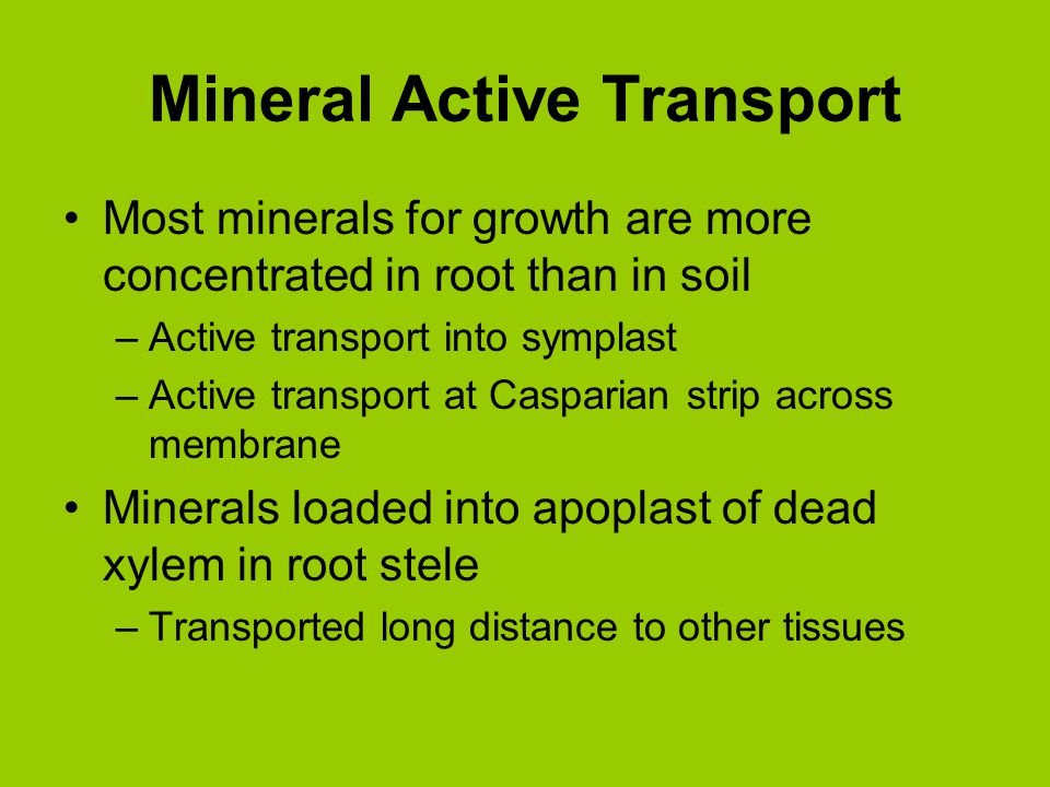 Mineral Active Transport Most minerals for growth are more concentrated in root than in soil –Active transport into symplast –Active transport at Casp