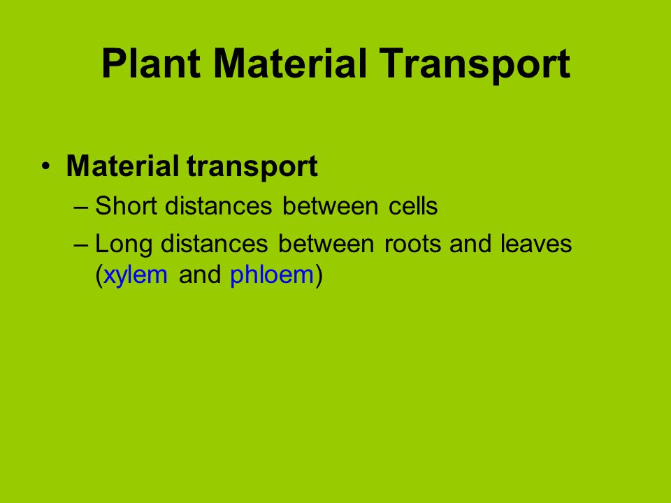 Organic Compounds Translocation –Long-distance transport of substances via phloem –Phloem flow under pressure, moves any direction Macromolecules broken down into constituents for transport across cell membranes Phloem sap composed of water and organic compounds that move through sieve tubes Transport of Organic Substances in the Phloem