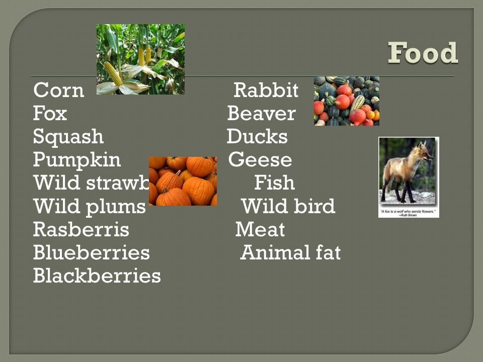 Corn Rabbit Fox Beaver Squash Ducks Pumpkin Geese Wild strawberries Fish Wild plums Wild bird Rasberris Meat Blueberries Animal fat Blackberries