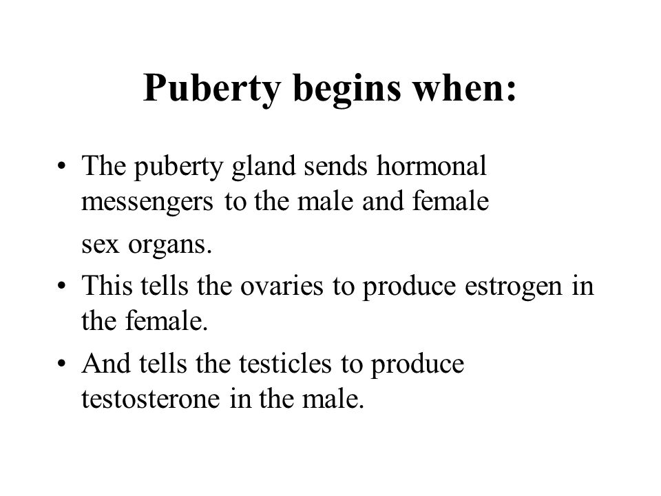 Puberty begins when: The puberty gland sends hormonal messengers to the male and female sex organs. This tells the ovaries to produce estrogen in the