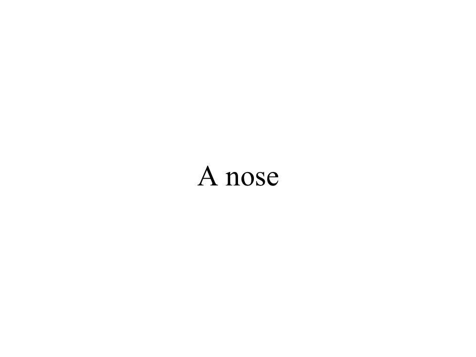 A nose
