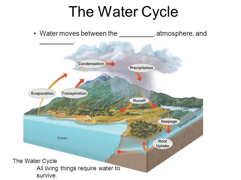The Water Cycle Water moves between the _________, atmosphere, and _________. The Water Cycle All living things require water to survive.