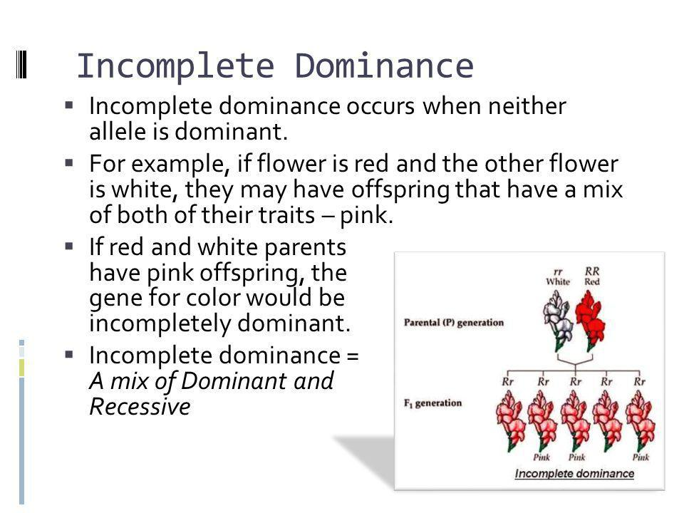 Incomplete Dominance & Punnett Squares  In Incomplete Dominance, nothing changes with the Punnett Square (except that we now have 3 phenotypes instead of 2)  In this case, White is rr, Red is RR, and the pink heterozygous offspring are Rr.
