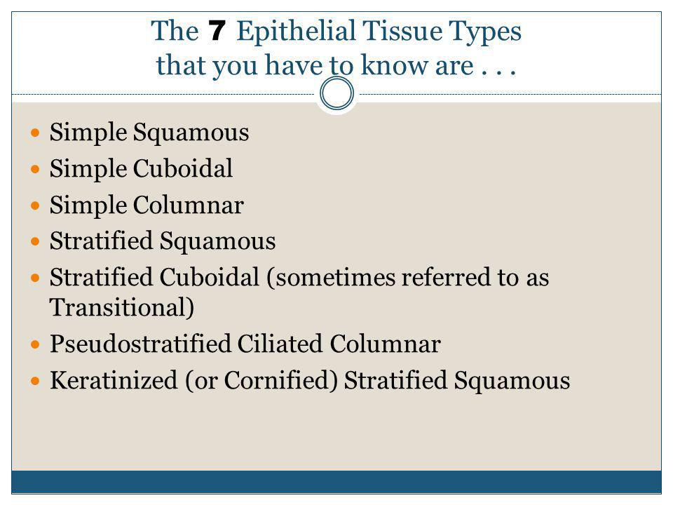 The 7 Epithelial Tissue Types that you have to know are... Simple Squamous Simple Cuboidal Simple Columnar Stratified Squamous Stratified Cuboidal (so
