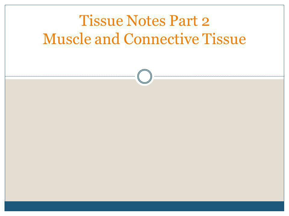 Tissue Notes Part 2 Muscle and Connective Tissue