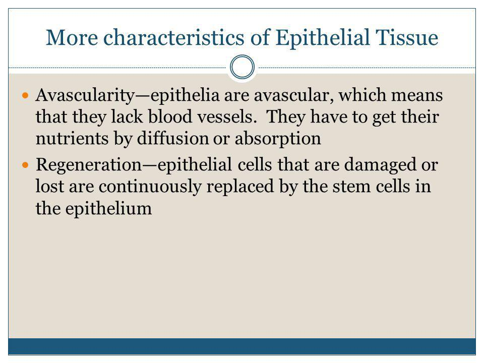 More characteristics of Epithelial Tissue Avascularity—epithelia are avascular, which means that they lack blood vessels. They have to get their nutri