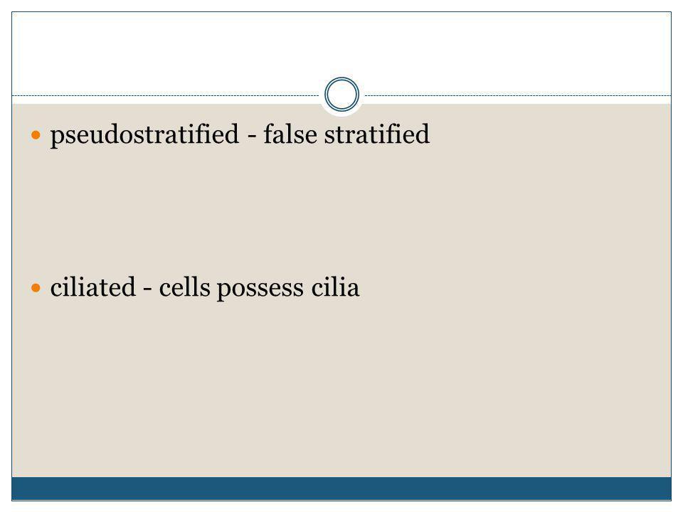 pseudostratified - false stratified ciliated - cells possess cilia