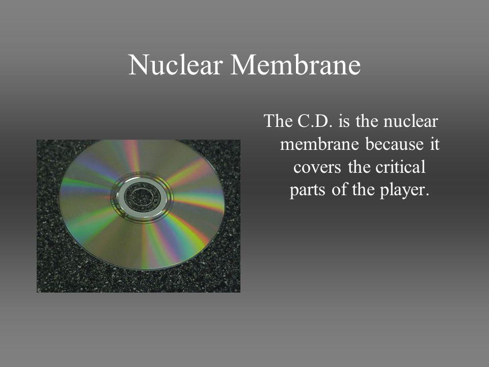 Nuclear Membrane The C.D.