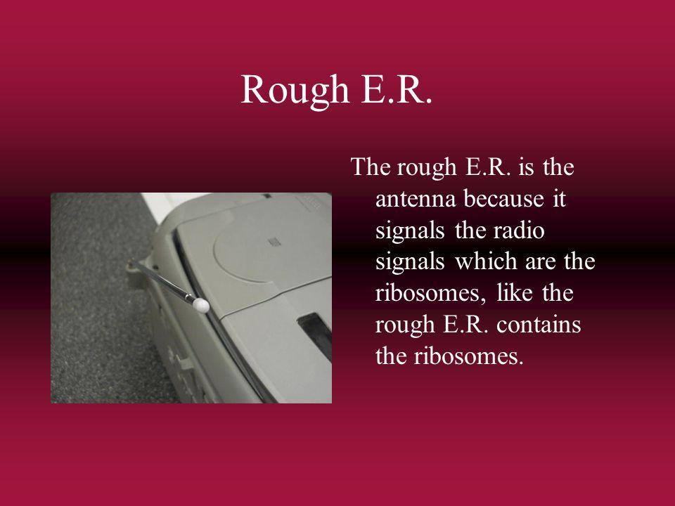 Rough E.R. The rough E.R.