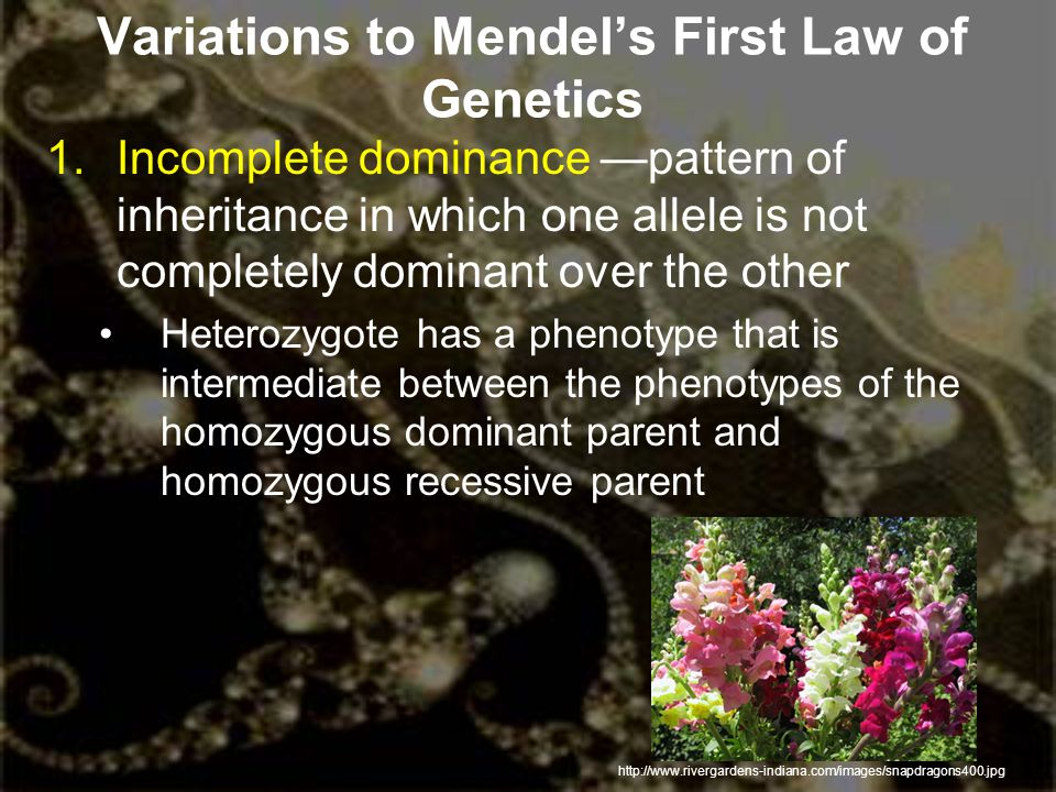 Variations to Mendel's First Law of Genetics 1.Incomplete dominance —pattern of inheritance in which one allele is not completely dominant over the ot