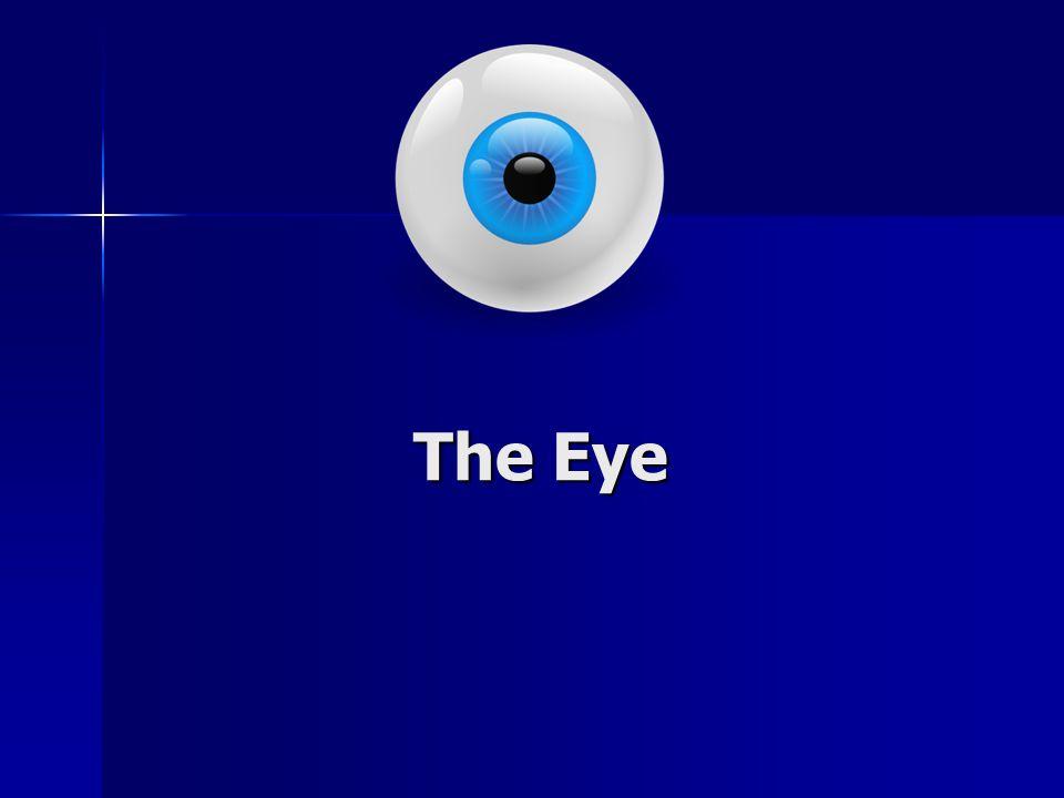 Parts of the Eye: Cornea Cornea Iris Iris Pupil Pupil Lens Lens Retina Retina