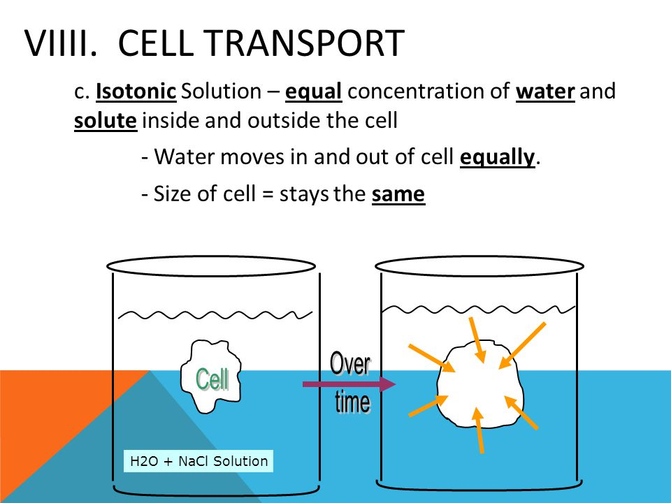 VIIII. CELL TRANSPORT c. Isotonic Solution – equal concentration of water and solute inside and outside the cell - Water moves in and out of cell equa