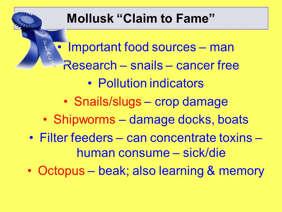 Mollusk Claim to Fame Important food sources – man Research – snails – cancer free Pollution indicators Snails/slugs – crop damage Shipworms – damage docks, boats Filter feeders – can concentrate toxins – human consume – sick/die Octopus – beak; also learning & memory