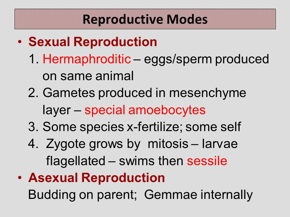 Reproductive Modes Sexual Reproduction 1.Hermaphroditic – eggs/sperm produced on same animal 2.