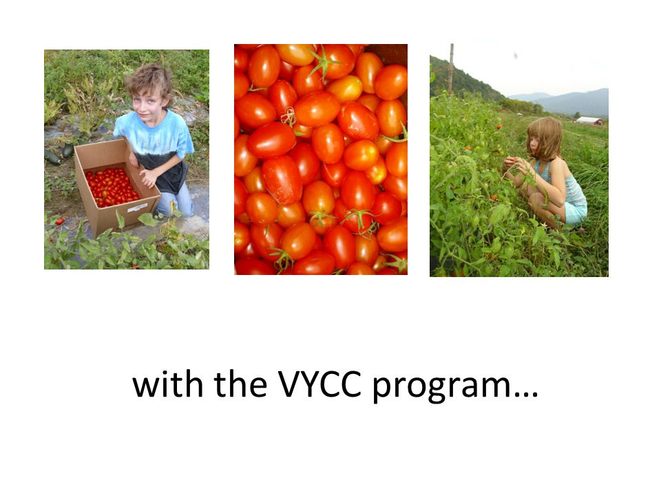 with the VYCC program…