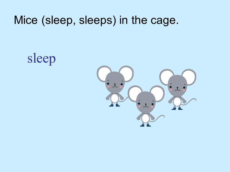 Mice (sleep, sleeps) in the cage. sleep