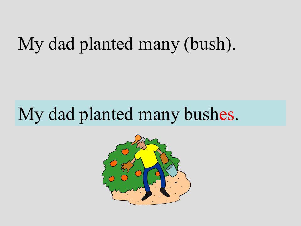 My dad planted many (bush). My dad planted many bushes.