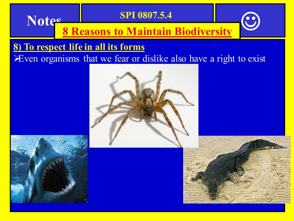SPI 0807.5.4 Biodiversity Notes 7) To preserve nature s beauty  Beautiful places with high biodiversity like Yellowstone park, the Smoky Mountains, and the Amazon Rainforest are popular places to visit 8 Reasons to Maintain Biodiversity