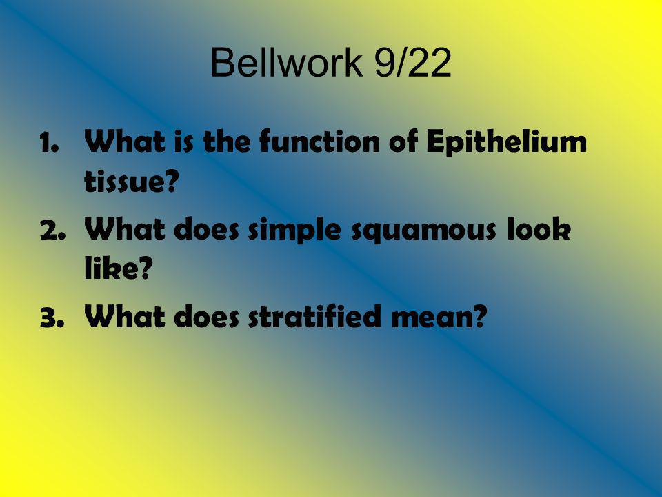 Bellwork 9/22 1.What is the function of Epithelium tissue? 2.What does simple squamous look like? 3.What does stratified mean?