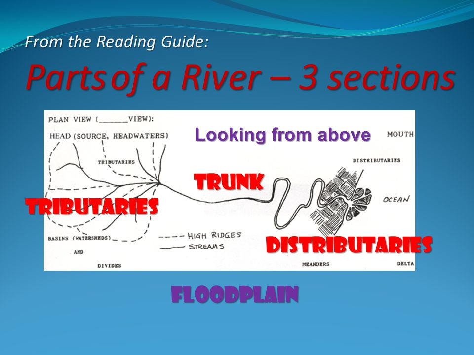 From the Reading Guide: Parts of a River – 3 sections Looking from above Tributaries trunk Distributaries Floodplain