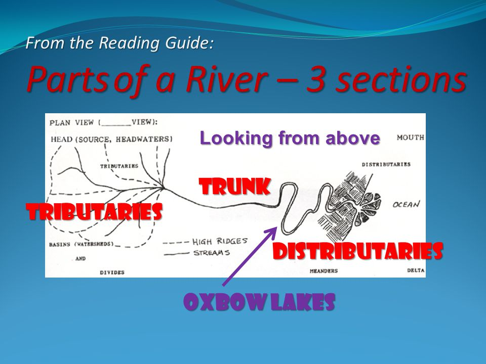 From the Reading Guide: Parts of a River – 3 sections Looking from above Tributaries trunk Distributaries Oxbow lakes