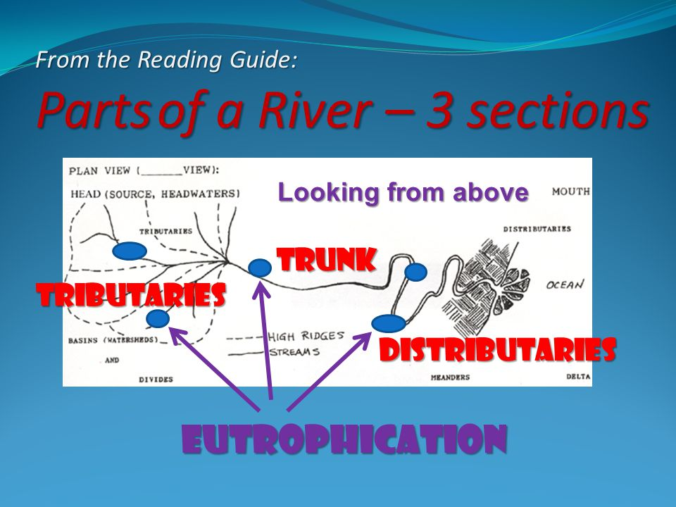 From the Reading Guide: Parts of a River – 3 sections Looking from above Tributaries trunk Distributaries eutrophication