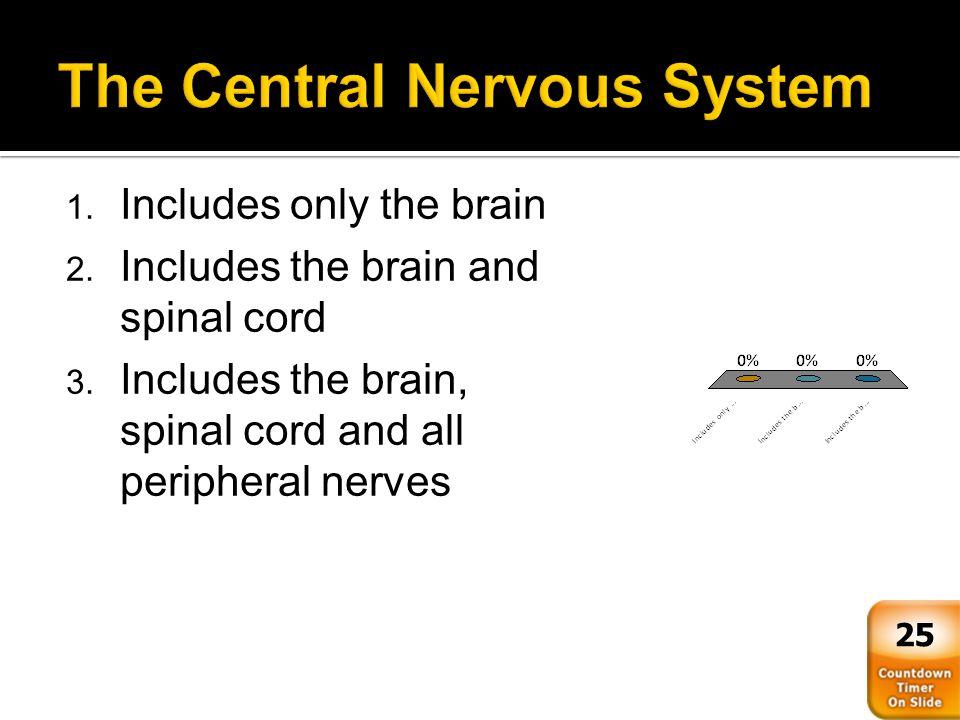  Wrap CNS axons like a jelly roll  Form insulating myelin sheath