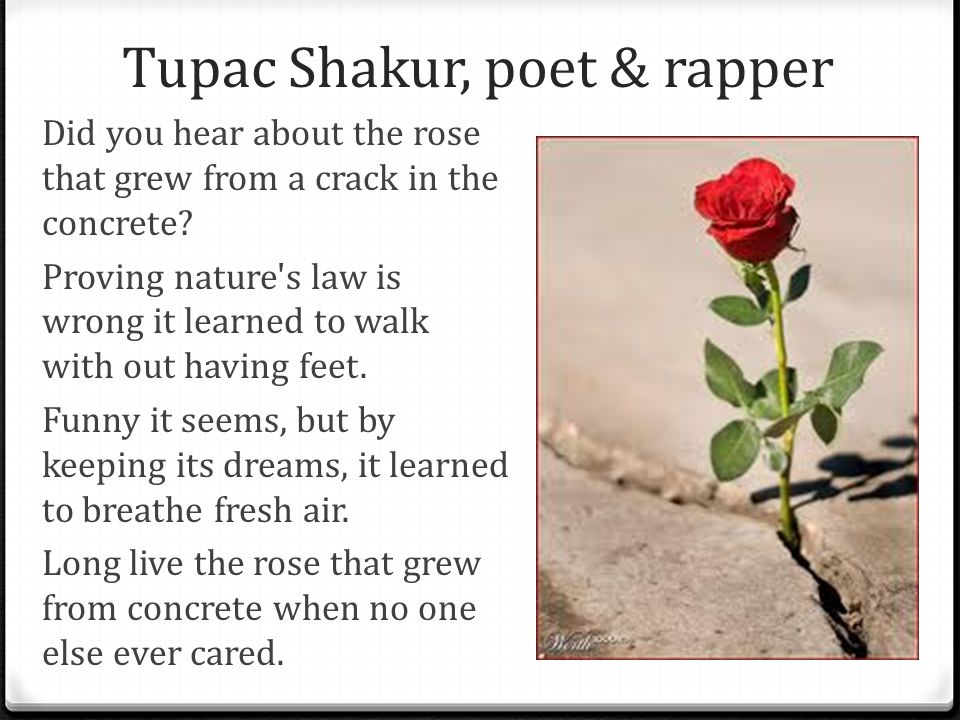 Tupac Shakur, poet & rapper Did you hear about the rose that grew from a crack in the concrete.