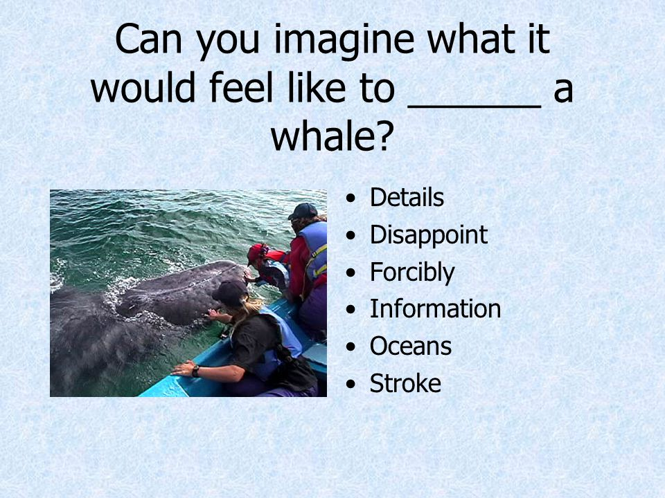 Can you imagine what it would feel like to ______ a whale? Details Disappoint Forcibly Information Oceans Stroke
