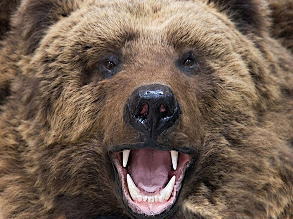 Run It's a bear