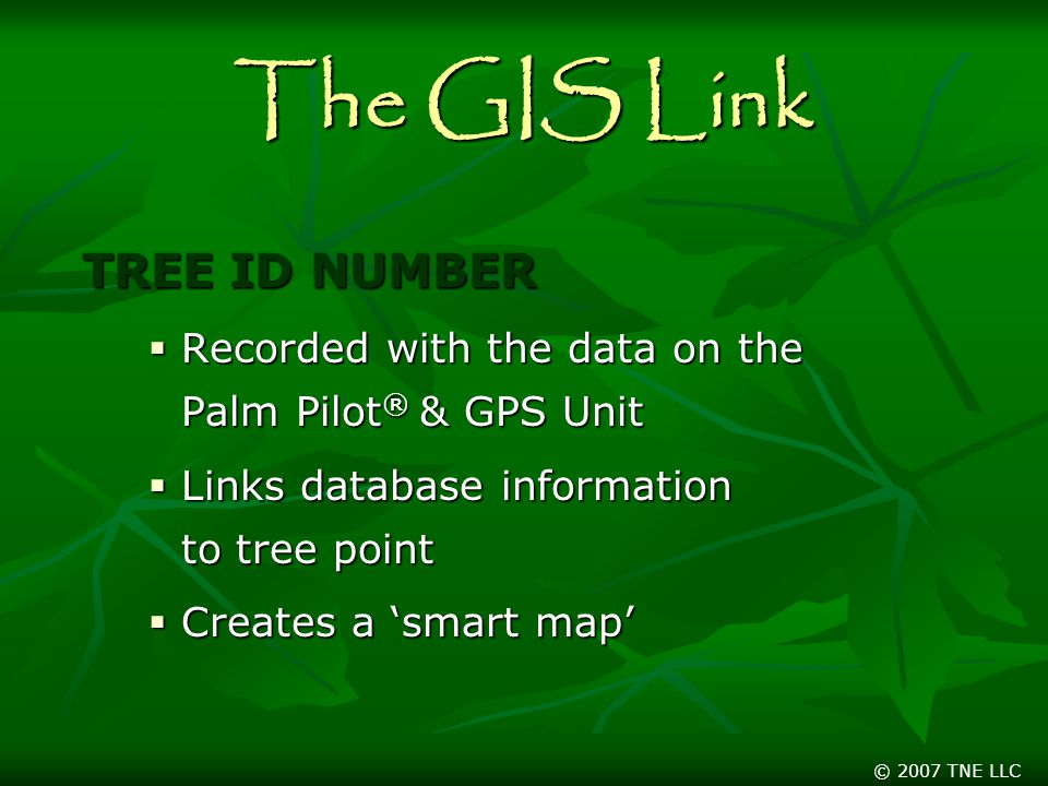 © 2007 TNE LLC The GIS Link TREE ID NUMBER  Recorded with the data on the Palm Pilot ® & GPS Unit  Links database information to tree point  Creates a 'smart map'