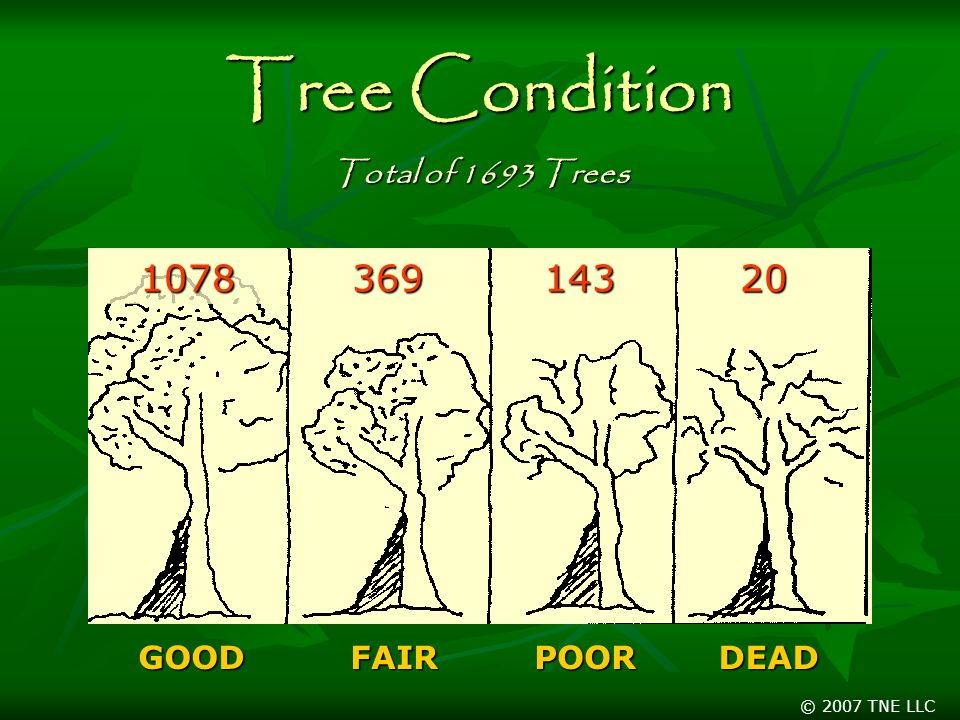 © 2007 TNE LLC Tree Condition GOODFAIRPOORDEAD Total of 1693 Trees