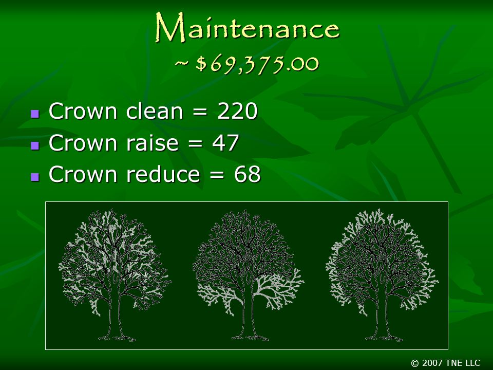 © 2007 TNE LLC Maintenance ~ $69, Crown clean = 220 Crown clean = 220 Crown raise = 47 Crown raise = 47 Crown reduce = 68 Crown reduce = 68