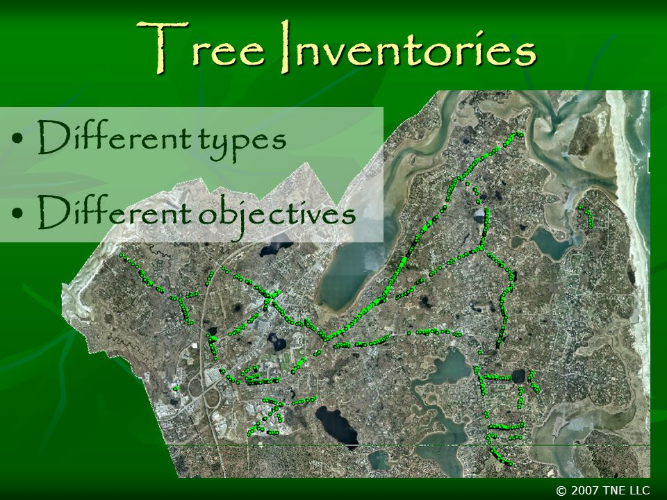 © 2007 TNE LLC Tree Inventories Different types Different objectives