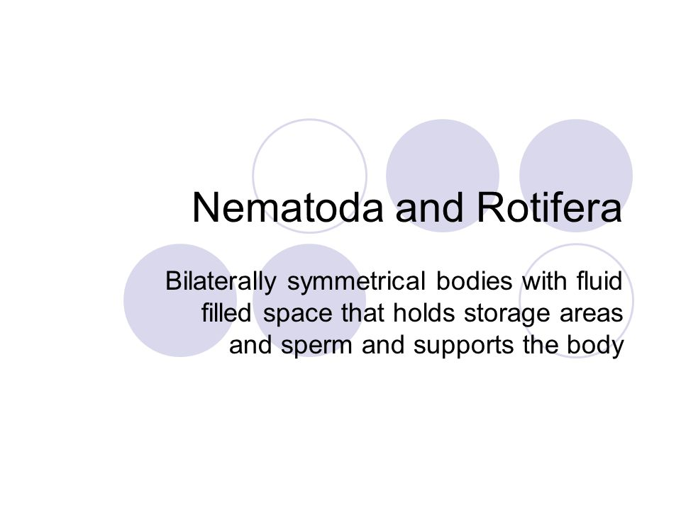 Nematoda and Rotifera Bilaterally symmetrical bodies with fluid filled space that holds storage areas and sperm and supports the body