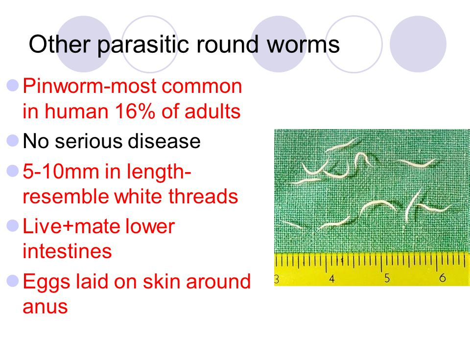 Other parasitic round worms Pinworm-most common in human 16% of adults No serious disease 5-10mm in length- resemble white threads Live+mate lower int