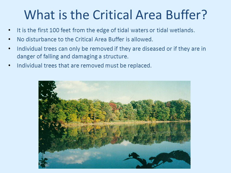 What is the Critical Area Buffer.