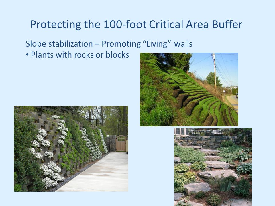 Protecting the 100-foot Critical Area Buffer Slope stabilization – Promoting Living walls Plants with rocks or blocks