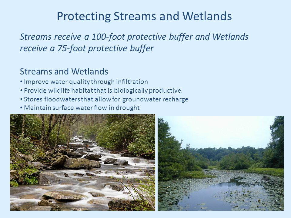 Protecting Streams and Wetlands Streams receive a 100-foot protective buffer and Wetlands receive a 75-foot protective buffer Streams and Wetlands Improve water quality through infiltration Provide wildlife habitat that is biologically productive Stores floodwaters that allow for groundwater recharge Maintain surface water flow in drought