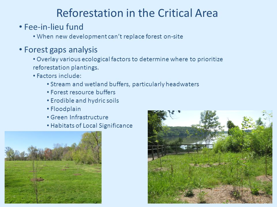 Reforestation in the Critical Area Fee-in-lieu fund When new development can't replace forest on-site Forest gaps analysis Overlay various ecological factors to determine where to prioritize reforestation plantings.