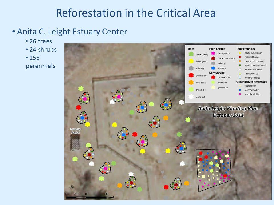 Reforestation in the Critical Area Anita C. Leight Estuary Center 26 trees 24 shrubs 153 perennials
